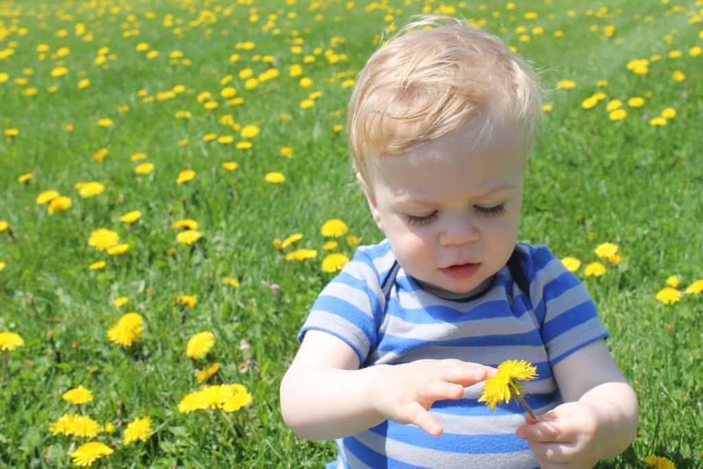 Nathan in the Dandelions